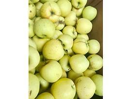 Български ябълки различни сортове